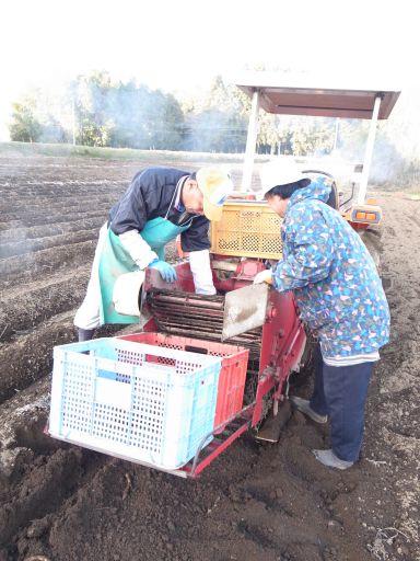 こんにゃくの収穫と冬支度(茂木町 天子)