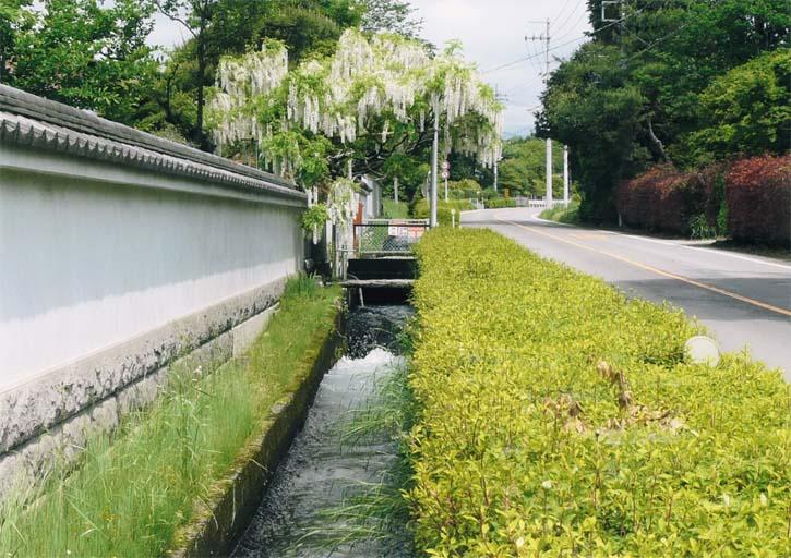 蟇沼用水と藤の花(那須塩原市 接骨木)