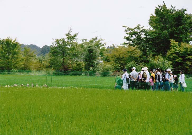 環境にやさしい合鴨水田の見学(那須塩原市 三区町)