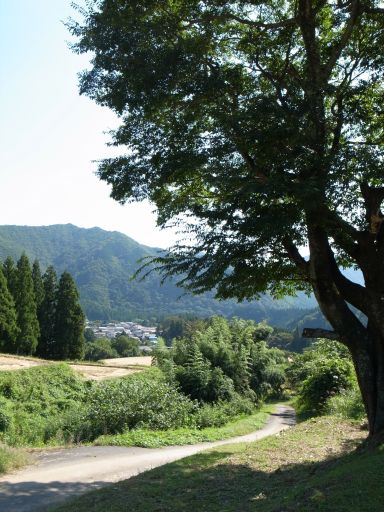 棚田の稲刈り(日光市 藤原)