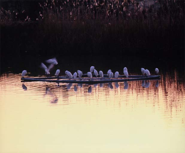 ため池に集う(小山市 羽川)