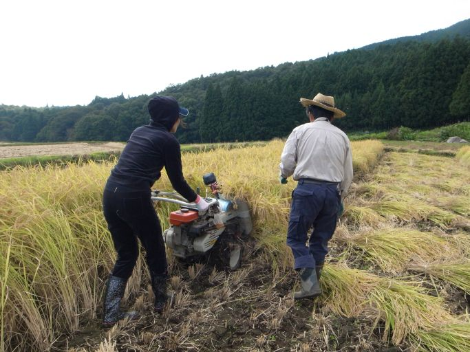 棚田オーナーたちによる稲刈り(矢板市 平野)