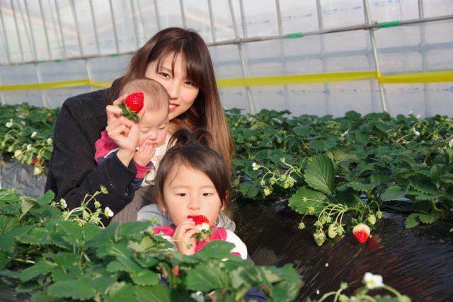 MASHIKO STRAWBERRY FARM(マシコストロベリーファーム)