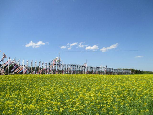 大谷の菜の花畑