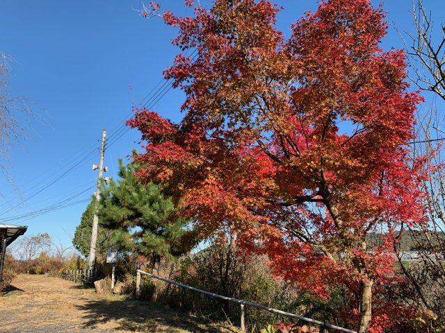 樹の花自然園 花の山