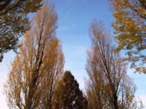 秋の街路樹