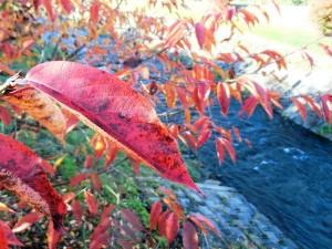 紅葉と田川