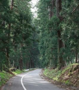 杉並木の風景