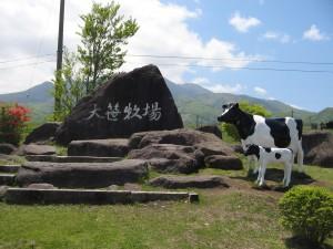 牛(ホルスイタイン)