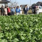 かき菜畑~1