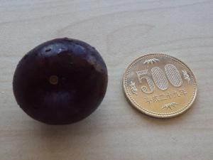 果実の大きさ