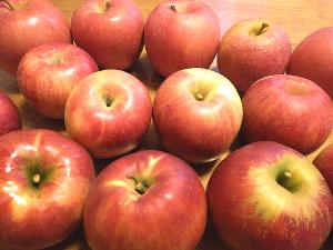 りんご食べ比べ